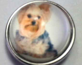 YORKIE SNAP..20mm glass...how cute? Love dogs!!!