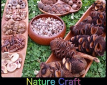Nature Craft Large Pack | Art & Craft | Nature Table | Australian Native Seed Pods