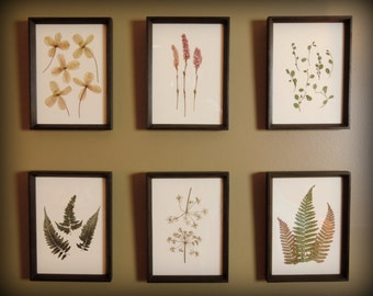 Framed Real Pressed Botanicals - Set of 6 in Handmade Walnut Frames
