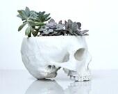 Skull Planter Large Size,  Succulents planter, Cactus planter