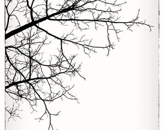Bare Tree Branch Nature Print.  Black and White Photograph of Tree Branches in Winter.  Minimal, modern wall decor. Fine art photograph,