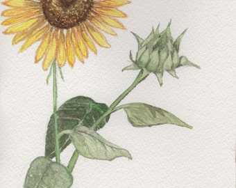 Original Art 'Sunflower' Greeting Card