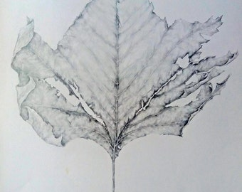 Withered Leaf Original Drawing