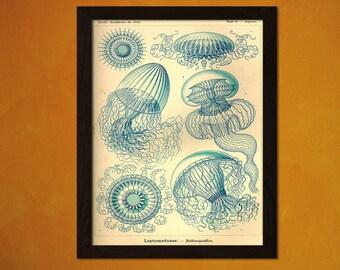 Printed on textured bamboo Art paper - Jellyfish Vintage Art Print 1904 Vintage    Ocean Art Nautical Print Sea Life Sea Style