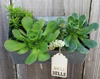 Wall mount succulent arrangement