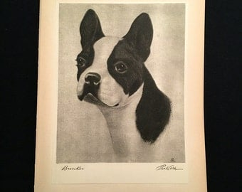 1931 Boston Terrier Print, High-Quality Original Etching by Bert Cobb, Portraits of Dogs