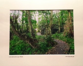 "Foxes Beck, Norfolk Boardwalk, Nature Reserve, Signed Limited Edition A4 Landscape Color Photograph in 40cm x 30cm (16"" x 12"") Mount"