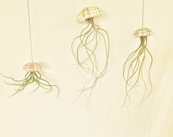 The Air Jellyfish 3 for 28 Dollars (Tillandsia Bulbosa, Butzii or Juncea Airplant Sea Urchin Hanging Plant Design)