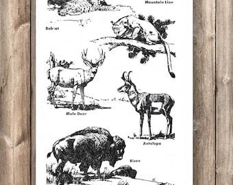 Fauna of the Grasslands - ON SALE!