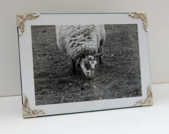 Black and white sheep: Framed photo