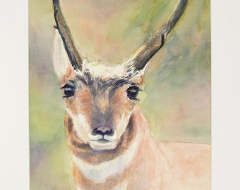 ORIGINAL painting, watercolor, signed, pronghorn antelope, wildlife, nature, gift art, 18x24/mounted 22x28