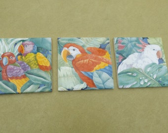 Sale 3 different Parrot tiles Coasters  Birds  4.25 X 4.25 inches smooth and glossy finish Do not lose color with time,Easy to clean. Gift