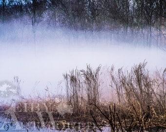 Fog in the Marsh