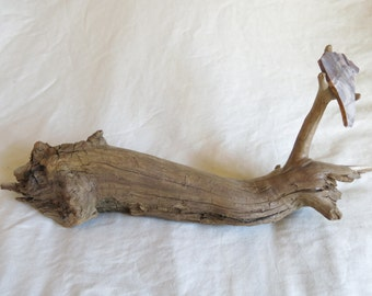 Driftwood & Jasper