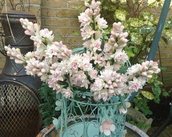 Tuberose - Cold Porcelain Flower
