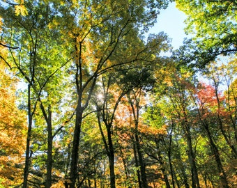 Fall Photo, Shenandoah National Park, National Parks, Nature Photography, Wall Art, Hiking, Autumn Photo, Fall Print, Outdoor Photography