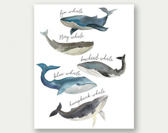 Whale Print, Whale Species, Watercolor Whales, Whale Printable, Whale Nursery Decor, Whales Nursery Art, Whale Nursery Poster, Boy Nursery