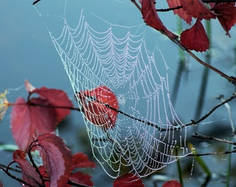 Morning Dew Spiderweb