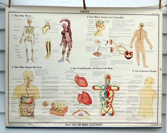 Man and His Body Functions Vintage Science Chart