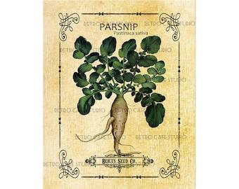 Vintage Illustration Parsnip Seed Packet Digital Download Vegetable Transfer Clip Art; 1005