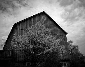 Black and White Barn in the Spring