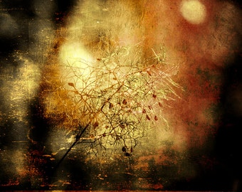 Romantic Abstract Dried Flower Photography Digital Fine Art