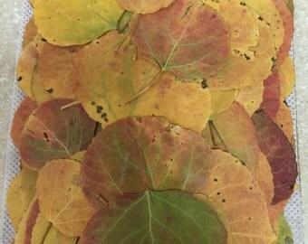 Aspen fall leaves 100 pak SALE