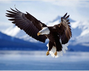 Bald Eagle In Flight Alaska Nature Poster Magestic Rare High Quality 24x36