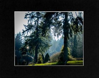 Photo Rose Gardens in Portland Oregon
