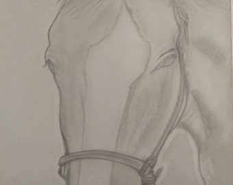 Horse1 drawing