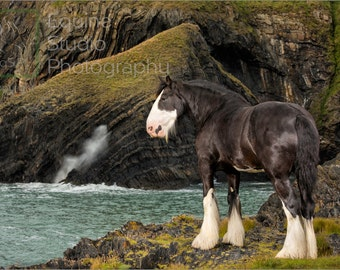 Ned with Pembrokeshire Coast Backdrop 1,  Fine Art Print, Equine Photography