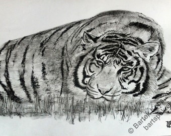 Original tiger drawing, tiger charcoal drawing, animal charcoal drawing, animal art, custom animal drawing, tiger painting, animal painting