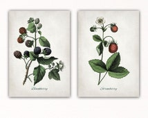 STRAWBERRY & BLACKBERRY print, strawberry blackberry poster, decor, botanical art, set of 2 prints, kitchen, restaurant, dining room, #3034