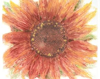 Sunflower red deep