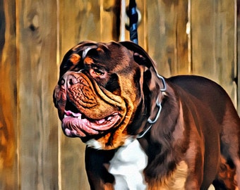 English bulldog - Print or Canvas