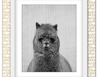 Alpaca Print, Alpaca Poster, Alpaca Printable, Black and White poster, Alpaca art, Alpaca Wall Art, Animal Wall Art, Animal printable art