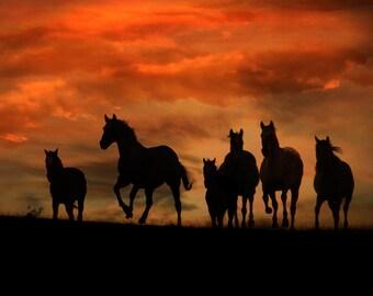 Herd of Horses Happy Birthday Card