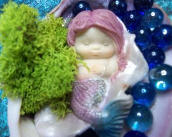Baby Mermaid in Seashell