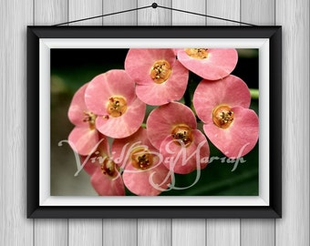 Inevitably Not- Nature Photography - Pink Flowers - Floral Art- Wall Decor- Nature Prints