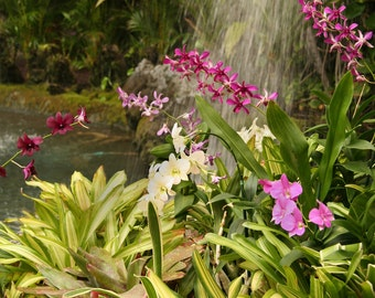 Pink Flower Photo, Pink Orchid Photo, 5x7, 8x10, 11x14 Photo,Hawaiian Flowers Photo, Hawaiian Orchids and Bromeliads, Plant Photo