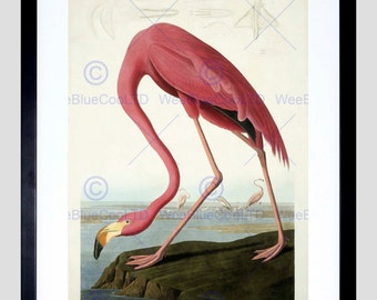 "Flamingo Art Print - Animal Painting Nature 12x16"" Poster FEBB5572B"