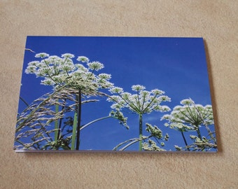 A6 Greeting card, flowers in fields