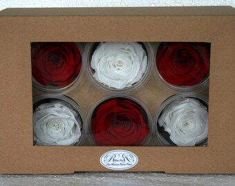 Stabilized eternal roses, set of 6 red roses