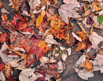 "High Res Autumn Photography Print - ""Leaves of Autumn"""