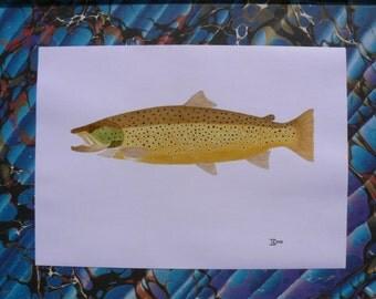 Ferox trout print