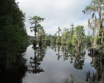 Southern swamp