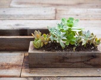 4x12 succulent planter
