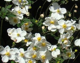 White Flowers on Black