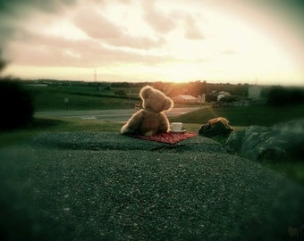 Teddy Watching the Sunset (FreedomFotos)