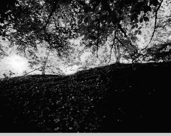 Trees at Night - Limited edition photograph in mount, on archive quality paper, with free UK shipping